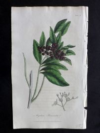 Cox Medical Botany 1822 Botanical Print. Pimento, Jamaica Pepper or All Spice 82